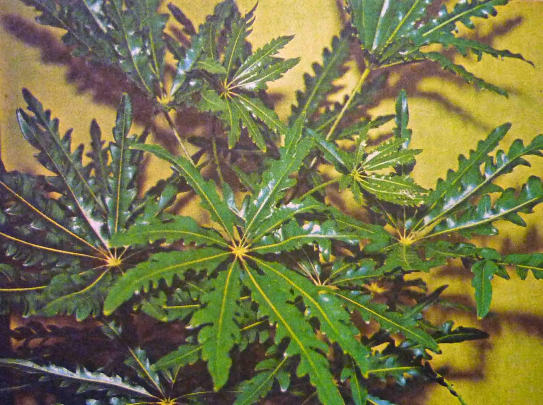 Редкие цветы названия описание и фото